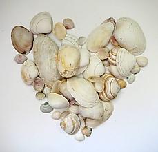 Suroviny - Baltská morská mušľa mix 20ks - 11891712_