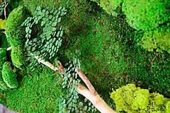 Obrazy - Machový obraz zo stabilizovaných rastlín na stenu - 11901988_