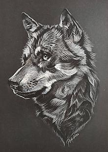 """Kresby - Kresba """"Vlk dravý"""" - 11903338_"""