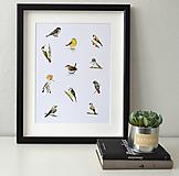 Kresby - Plakát ptáci - vel. A3 - 11909789_