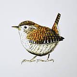 Kresby - Plakát ptáci - vel. A3 - 11909792_