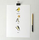 """Kresby - Plakát - ptáci """"1"""" - 11909806_"""