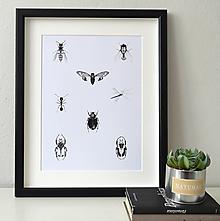 Kresby - Plakát hmyz - vel. A3 - 11909763_