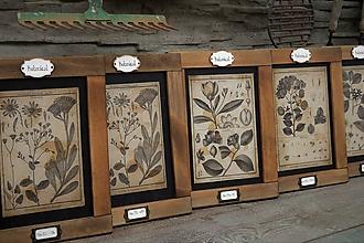 Tabuľky - Botanický obrázok zo starého kabinetu - 11934283_