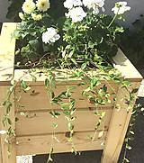 Nádoby - Drevený kvetináč - 11992104_