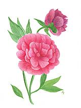 Obrazy - Flower mood - 11992929_