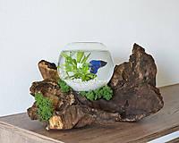 Dekorácie - Dizajnové akvárium z dreva - 12024271_