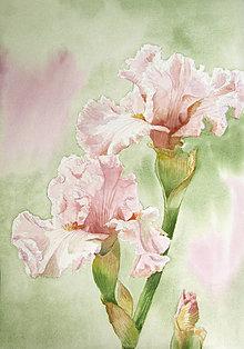 Obrazy - Růžové kosatce - originál, akvarel - 12034235_