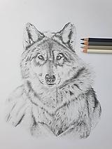 Kresby - Kresba-Vlk originál - 12054179_