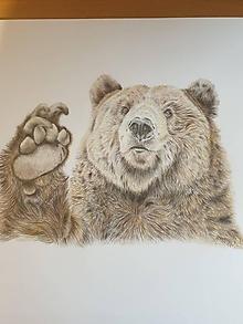 Kresby - Kresba -Medveď hnedý Originál - 12059755_