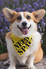 Pre zvieratká - Žltá šatka pre psíka - need space/ som z útulku - 12060668_