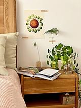 Grafika - Hello plantshine! - Print | Botanická ilustrácia - 12067693_