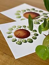Grafika - Hello plantshine! - Print | Botanická ilustrácia - 12067694_