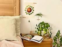 Grafika - Hello plantshine! - Print | Botanická ilustrácia - 12067696_