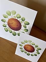 Grafika - Hello plantshine! - Print | Botanická ilustrácia - 12067701_