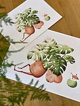 Grafika - Letná pohodička - Print   Botanická ilustrácia - 12067775_