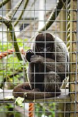 Batohy - Batoh z autorské látky - opičky v mlze - 12085137_