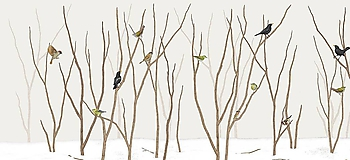 BIRDS IN FOREST