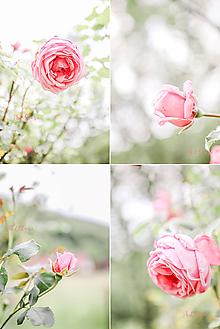Fotografie - Ružová kolekcia (printy) - 12107520_