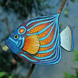 Brošne - Blue Ring Angelfish - kožená brož s malbou - 12107949_