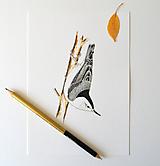 Kresby - Brhlík běloprsý - 12146953_