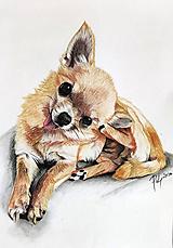 """- Maľba pastelom """"Čiči"""" - 12164847_"""