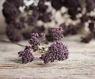 Dekorácie - Sušené kvety, plody (oregano (veľká)) - 12189944_