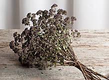 Dekorácie - Sušené kvety, plody (oregano (veľká)) - 12189945_