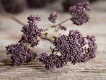 Dekorácie - Sušené kvety, plody (oregano (veľká)) - 12189946_
