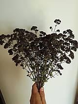 Dekorácie - Sušené kvety, plody (oregano (veľká)) - 12189977_