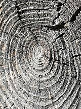 "Fotografie - Fotografia ""Pamäť stromu""  - 12205214_"