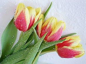 Obrazy - Fotoobraz - Duše Tulipánů (60x45cm) - 12208898_