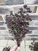Dekorácie - Sušené kvety, plody (oregano (stredná)) - 12215282_