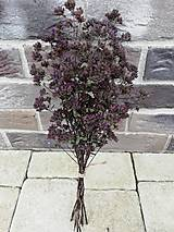 Dekorácie - Sušené kvety, plody (oregano (stredná)) - 12215286_