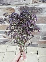 Dekorácie - Sušené kvety, plody (oregano (malá)) - 12215287_