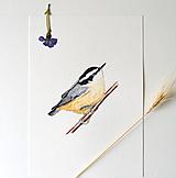 Kresby - Brhlík americký - originál - 12287028_
