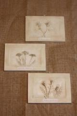 Obrazy - Ďatelina lúčna - botanický obraz - 12323262_