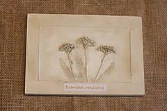 Obrazy - Rebríček obyčajný - botanický obraz - 12323278_