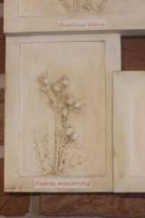 Obrazy - Botanický herbár liečivých bylín - 12323348_