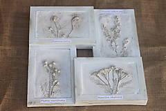 Obrazy - Botanický herbár liečivých bylín - 12323350_