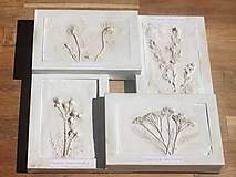 Obrazy - Botanický herbár liečivých bylín - 12323358_