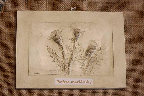 Pestrec mariánsky- botanický obraz