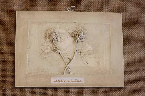 Ďatelina lúčna - botanický obraz