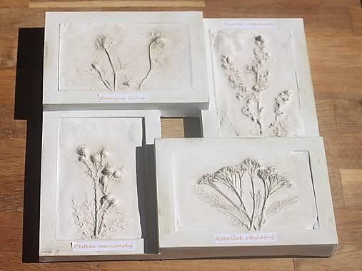 Botanický herbár liečivých bylín
