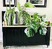 """Interiérová truhlica na rastliny vo vintage style """"Andreas"""""""