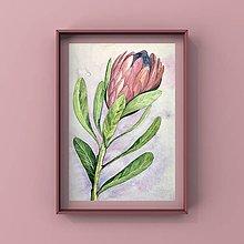 Obrazy - Maľba-Protea - 12388448_