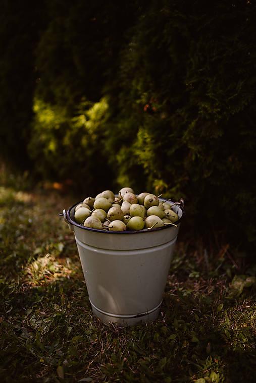 Fotografie - Jesenné dary prírody - 12394687_