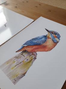 Kresby - print -vtáky - 12429281_