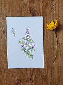 Kresby - Kresba -rastlinka Mäta - 12443546_