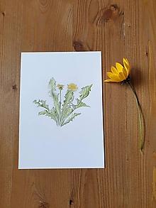 Kresby - Kresba : Rastlinka Púpava lekárska - 12449999_